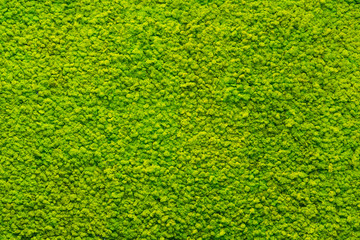 green moss texture, background