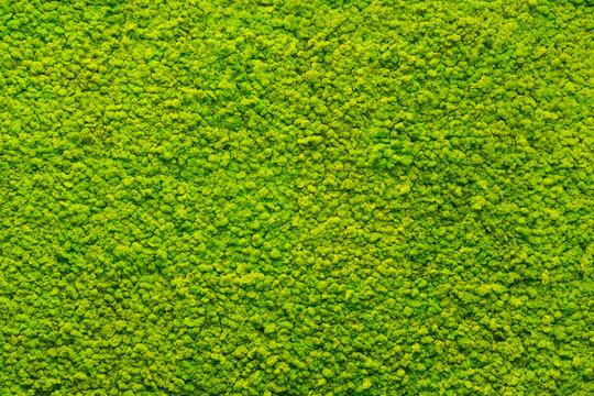 green moss texture, background