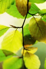 Twig with green and vivid yellow autumn leaf.