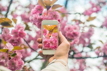 Hand holding smartphone taking photo of cherry blossom.