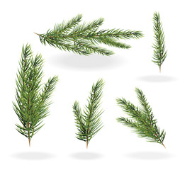 Christmas tree branches set. spruce fir-tree. Branches of a fir tree isolated vector illustration on a white background