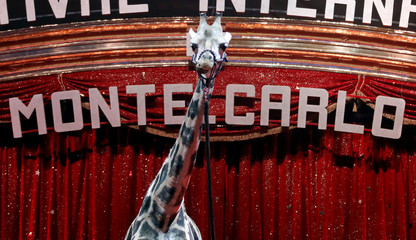 A giraffe is seen during a photocall for the presentation of the 42nd International festival circus of Monte Carlo in Monaco