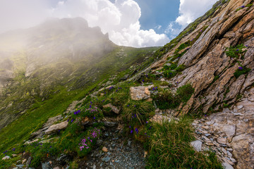 flowers and grass on rocky cliffs in fog. beautiful nature scenery in Fagarasan mountains on a cloudy summer day