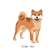 Furry human friend, home animal and decorative dog: shiba inu.