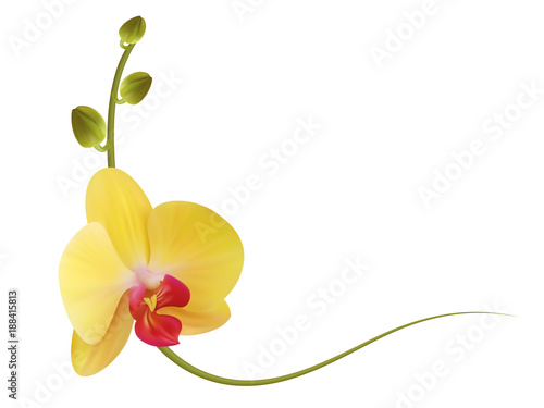 Realistic yellow orchid frame, corner.\