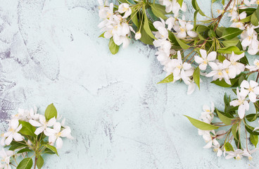 apple blossoms on light green surface