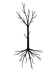Silhouette young tree without leaves