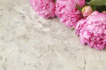 Composition with beautiful peony flowers on grey textured background