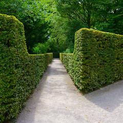 High hedges in the city park