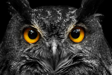 Foto op Aluminium Uil Black and white portrait owl with big yellow eyes