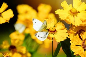 Sommerblumen und Schmetterlinge