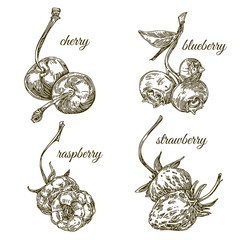 Set of ripe berries. Strawberry, raspberry, blueberry and cherry. Engraving style. Vector illustration.