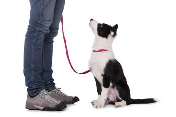 Welpe macht sitz vor dem Hundebesitzer