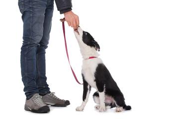 Hund erhält Belohnung