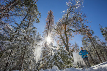 Man hiking in forest in winter in High Sierras, California, USA