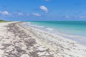 Tranquil Caribbean Beach On A Summer Day