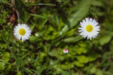 beautiful flowering spring plants, nature awakens