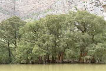 Ahuehuetes growing along banks of Nazas River in Canon de Fernandez State Park, Durango, Mexico