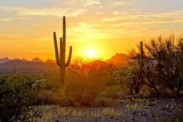 Foto auf Leinwand Arizona Sunset view of the Arizona desert with Saguaro cacti and mountains