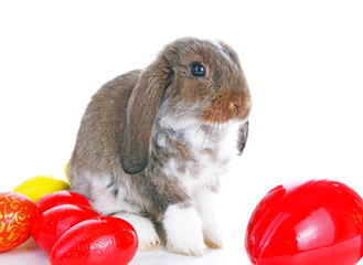 Easter bunny rabbit lop with eggs on isolated white background.