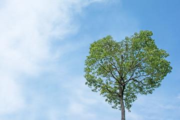 ハート型の木    さわやかな青空