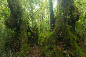 In the Australian rainforest