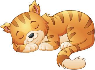Cute cat sleeping
