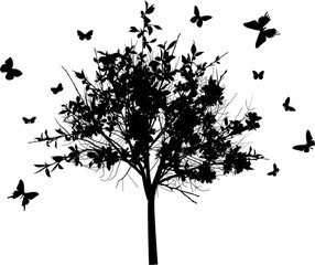 blossoming black tree and butterflies isolated on white