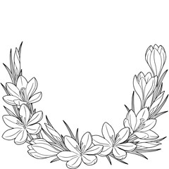 Spring flower vignette of crocuses. Coloring book. Black and white image for adult relaxation.