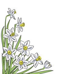 vector white narcissus corner pattern