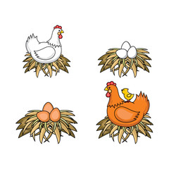 Vector flat poultry farm chicken set. Brown, white hen chickens, eggs in hay nest, yellow small chick sitting at chicken. Isolated illustration, white background. Organic food design