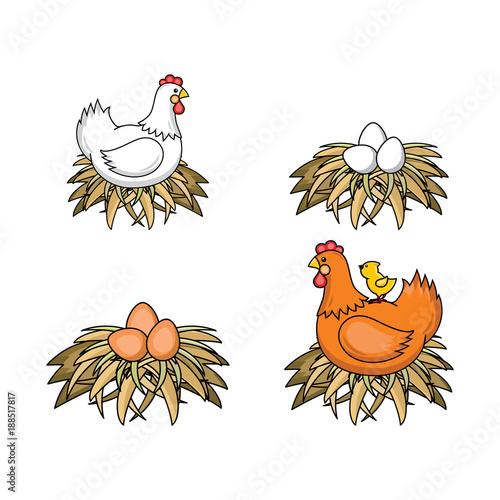 Vector flat poultry farm chicken set  Brown, white hen