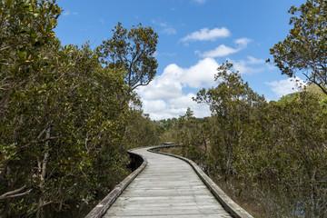 Mangrove hiking