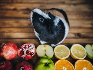 Guinea Pig wants to try juicy fruit. Apples, oranges, lemons, grenades. Wooden background. Feeding guinea pigs.