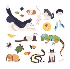 Collection of pets isolated on white background. Set of cute cartoon domestic animals - mammals, birds, fish, rodents, reptiles and insects. Modern colorful vector illustration in flat style.