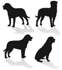 Rottweiler - Vector dog silhouettes collection isolated on white