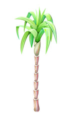 palm tree drawing isolated on white background