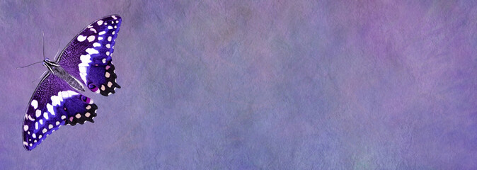 Purple Butterfly Message Board Banner - wide rustic stone effect banner with a beautiful single open winged butterfly on left side and plenty of space for copy in middle and right of banner
