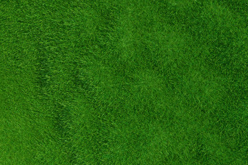 Green grass background. Natural background. Top view. 3d rendering