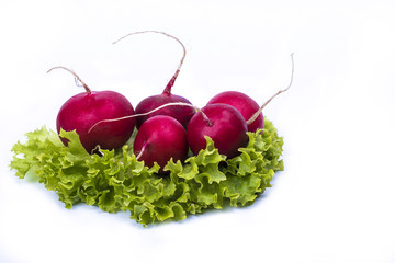 cabbage and radishes isolated on a white background