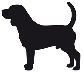 Beagle dog - Vector black silhouette isolated