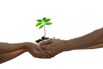 Two hands holding together a green young plant isolated on white background
