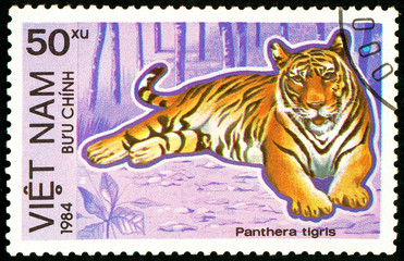 Ukraine - circa 2018: A postage stamp printed in Vietnam show Tiger or Panthera tigris. Series: Endangered Animals. Circa 1984