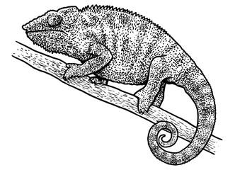 Chameleon illustration, drawing, engraving, ink, line art, vector