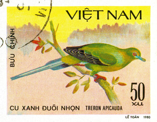 Ukraine - circa 2018: A postage stamp printed in Vietnam show Pin-tailed Green-pigeon or Treron apicauda. Series: Doves. Circa 1980.