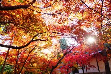 京都嵐山二尊院の紅葉
