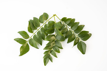Top View of Fresh Green Curry Leaves Isolated on White Background