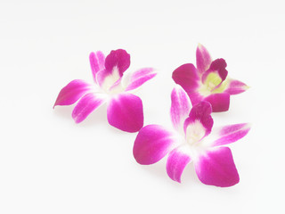 Three white and purple blooming orchid flower