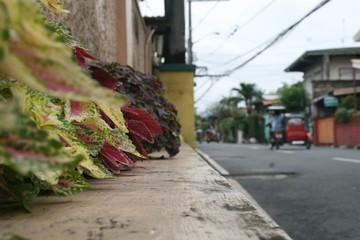 Streetside Plants