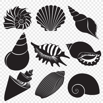 Vector sea shells black silhouettes isolated on the alpha transperant background.